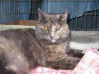 Tortoiseshell - Platina - Medium - Baby - Female - Cat