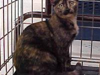Tortoiseshell - Rosebud 22710 - Large - Young - Female