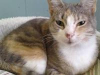 Tortoiseshell - Smarty - Medium - Young - Female - Cat
