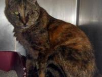 Tortoiseshell - Talli-adopted - Large - Adult - Female
