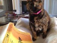 Tortoiseshell - Agatha - Medium - Young - Female - Cat