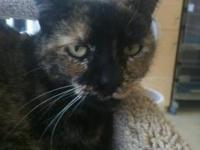 Tortoiseshell - Calli - Medium - Adult - Female - Cat
