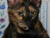 Tortoiseshell - Frannie - Medium - Young - Female -