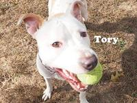 Tory's story Tory came to the shelter through animal