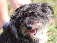 Tot $325's story Sisters Tink and Tot are terrier mix