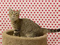 Tot's story   Adoption fee for cats is $65.00