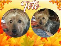 Toto's story TOTO: Meet Toto!! He would be absolutely