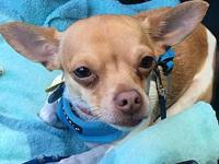 Townsend's story This cutie loves other dogs, he is