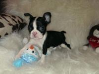We have 3 ladies and 2 males available out of a litter