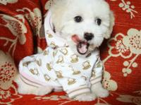 I have 2 Girl Maltipoo Puppies available. They depend