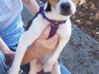 Toy Fox Terrier - Nelson - Small - Young - Male - Dog