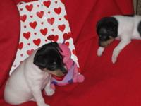 "EXPECTING A LITTER OF ""CHAMPION BRED"" AKC reg. PUPPIES"