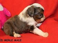 "LITTER NO. 1 BORN 11-17-14, to 12"" Belle & & 13-1/2"""