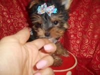 2 Left! adorable Morkies Babydoll puppies,