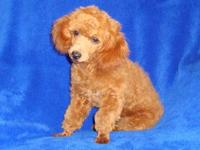 I have a pair of Red Toy Poodle Twin Sisters.They are