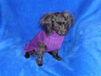 I have a very tiny toy poodle female.She is a beautiful