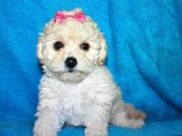 We have 6 beautiful purebred toy poodle puppies that