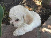 I have 1 purebred poodle puppy I'm trying to re-home.