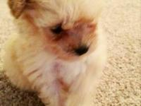 I have a female toy poodle puppy for for sale, almost