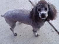 Wooly is a beautiful gray boy. He is fully vetted and
