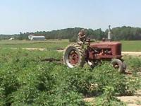 farmall H 1600.00 OBO text or call  Location: sycamore