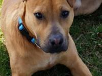 Sat. Apr. 11 from 11-3 Dune Dawgs Rescue will be at