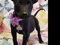 Tracy's story Meet Tracy.  This sweet bundle of