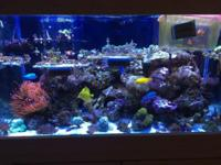 I have a 120 gallon complete saltwater reef aquarium