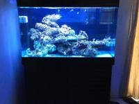 I have a Red Sea max 65 gallon all in one reef
