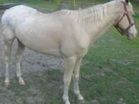 We have a palomino app gelding who needs someone who