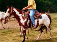 CC Miss Sonnyskip. is an 11 year old tri paint mare. CC