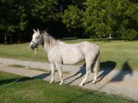 12 year old gelding. Good trail horse. call  Location: