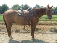 Trail Horse for Sale..would make a great ranch