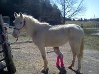 Great little mare, 14.3hh, 6-7yr old, great kids horse,