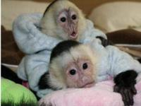 We have been giving out a Cute baby Monkey For Free