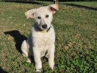 Born 8/13/2013,Velly is VERY sweet, easy to work with,