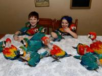 Parrots for sale- Various Species Available-Tamed,
