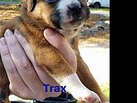 Trax's story The 4 week old T pups rescued from a junk