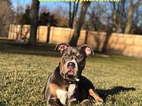 My story Terrific Tre! This handsome little tripod has