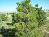 Transplanting trees is my business. Tree's for sale,