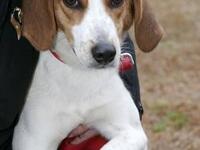 Treeing Walker Coonhound - 0a13205b7d - Medium - Adult