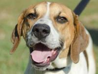 Treeing Walker Coonhound - Billy Jo The Walker Hound -