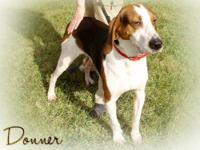 Treeing Walker Coonhound - Donner--sponsored For