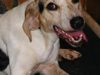 Treeing Walker Coonhound - Trudi - Medium - Adult -