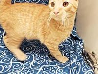 Tres's story This handsome 6 month old orange tabby is