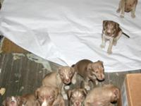 4 boys 4 girls DOB 4/12./15 from Hannibal x Holley.