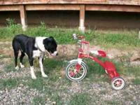 Like New childrens Tricycle, red/white. $25 OBO (dog