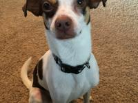 Trigger is a sweet, shy 2 year old mixed breed. He