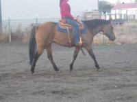 8 year old PRETTY and sweet Dun Aqha mare for sale. 15