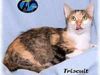 Triscuit's story Petite & Sweet. Great temperament and